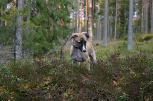 zoya_skog